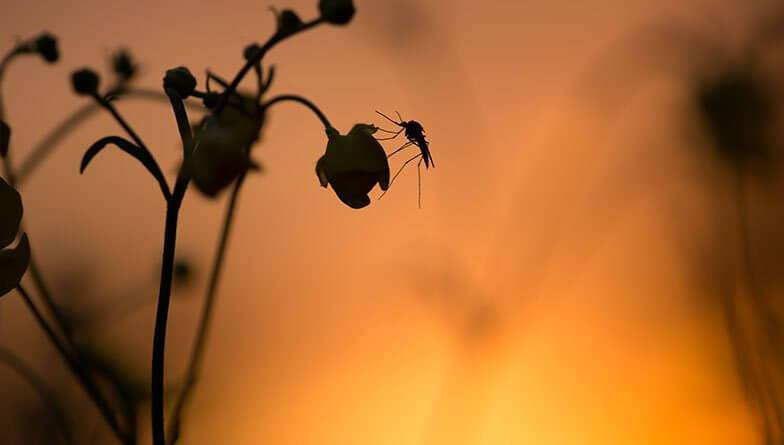 Hilfe bei Malaria, Moskitos