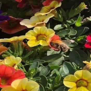 Allergie auf Insektenstiche