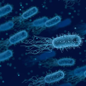 Kutanes MIkrobiom bei Neurodermitis